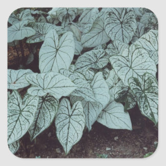 Green Leaves Square Sticker