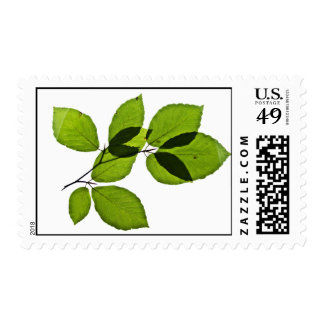 Green leaves stamp
