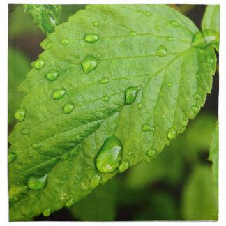 Green leaves with drops Folhas verdes com gotas Gr Napkin