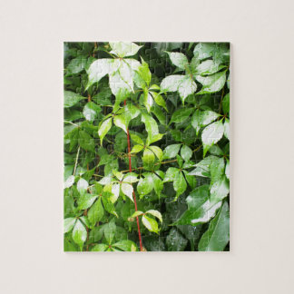 Green leaves with water droplets jigsaw puzzles