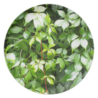 Green leaves with water droplets melamine plate