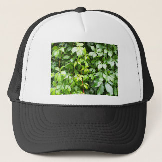 Green leaves with water droplets trucker hat