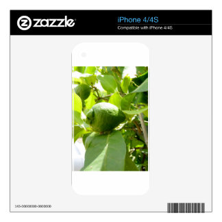 Green lemons on tree branches decals for the iPhone 4S