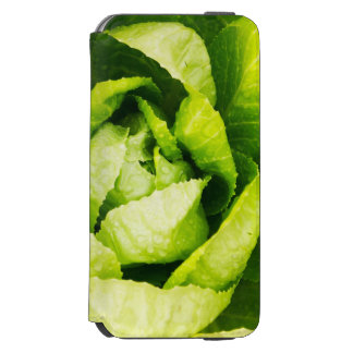 Green Lettuce Leaves With Raindrops iPhone 6/6s Wallet Case