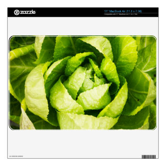 Green Lettuce Leaves With Raindrops MacBook Air Decal