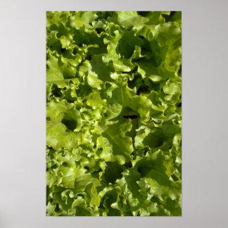 Green lettuce print