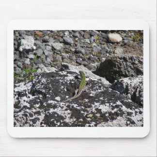 Green Lizard On A Rock Mouse Mat