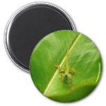 Green Lizard on Green Leaf 2 Inch Round Magnet