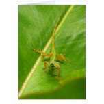 Green Lizard on Green Leaf Card