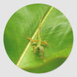 Green Lizard on Green Leaf Classic Round Sticker