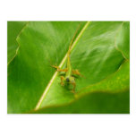 Green Lizard on Green Leaf Postcard