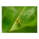 Green Lizard on Green Leaf Poster