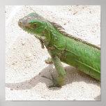 Green Lizard Print