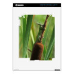 Green Lizard Tablet and E-Reader Decal Skin iPad 3 Decal