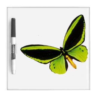 Green longwing butterfly design dry ease boards dry erase board