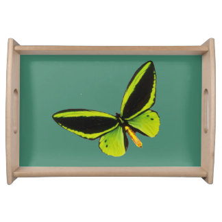 Green longwing butterfly design food trays