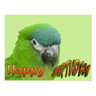 Green Lorikeet Happy Birthday Cust. Postcard