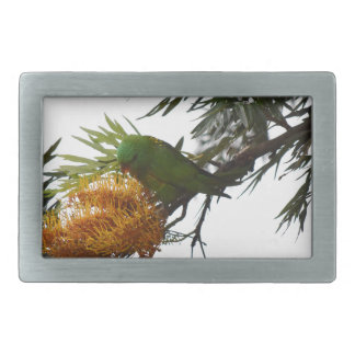 GREEN LORIKEET RURAL QUEENSLAND AUSTRALIA BELT BUCKLE