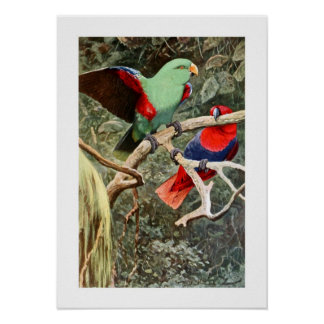 Green Lory Poster