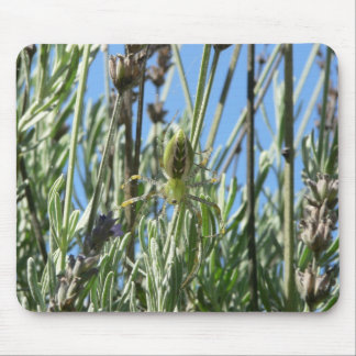 Green Lynx Spider in Lavender Mouse Pad