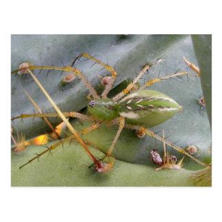 green lynx spider postcard