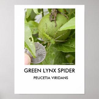 Green Lynx Spider poster