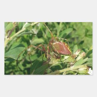 Green Lynx Spider Rectangular Sticker