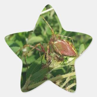 Green Lynx Spider Star Sticker