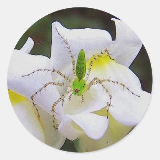 Green Lynx Spider Stickers