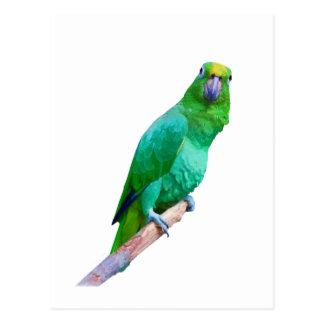 Green Macaw Parrot on a Limb Customizable Postcard