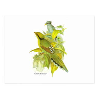 Green Magpie Postcards