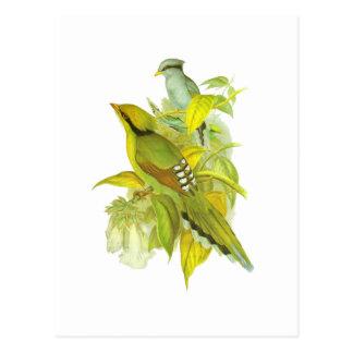 Green Magpie Postcard