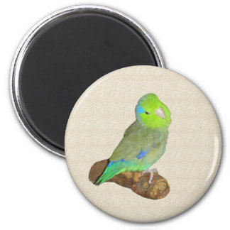 Green male parrotlet refrigerator magnets