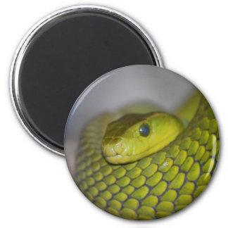 Green Mamba 2 Inch Round Magnet
