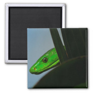 green mamba 2 inch square magnet