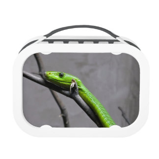 Green Mamba Lunch Boxes
