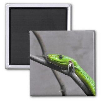 Green Mamba Magnets