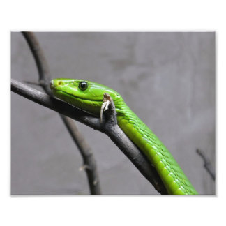 Green Mamba Photo Art