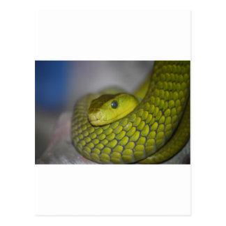 Green Mamba Postcard