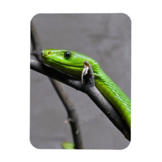 Green Mamba Flexible Magnet