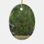 Green mangrove background, dock leading in christmas tree ornament