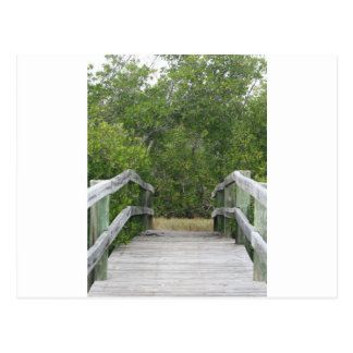 Green mangrove background, dock leading in postcard
