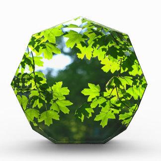 Green maple leaves backlight award