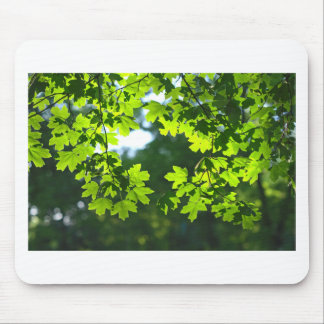 Green maple leaves backlight mouse pad