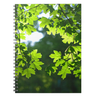 Green maple leaves backlight spiral notebook