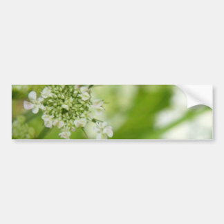 Green Meadowsweet Bumper Sticker