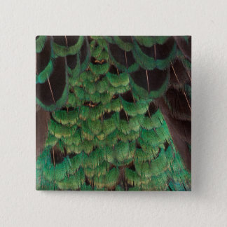 Green Melanistic Pheasant Feathers Pinback Button