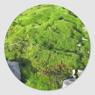 Green Moss Classic Round Sticker