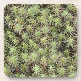 Green Moss Coaster