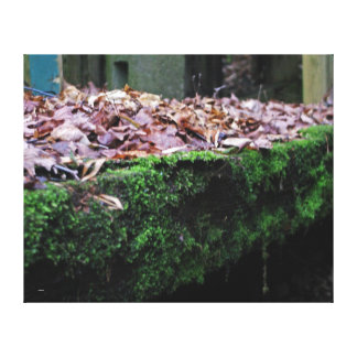 Green Moss covered table Canvas Print